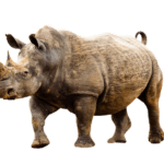 Great Rhino the Slot Game