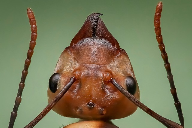 queen ant, ant, ant head