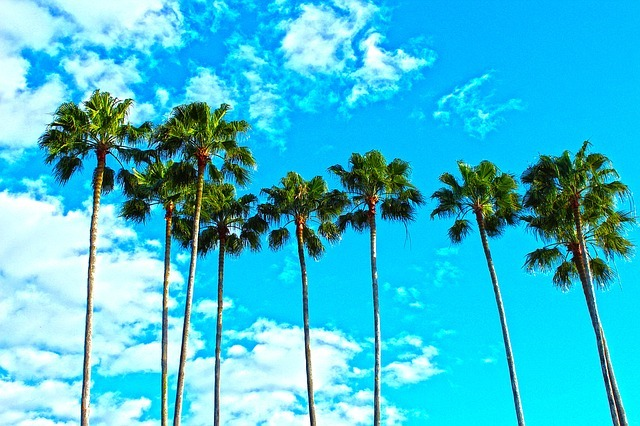 palm trees, florida, tropical