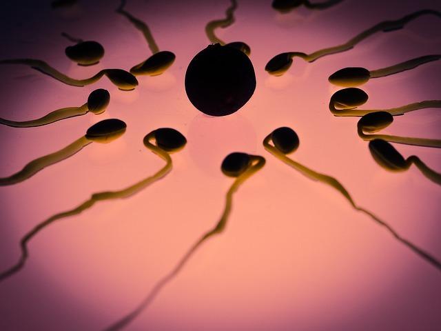 sperm, egg, fertilization