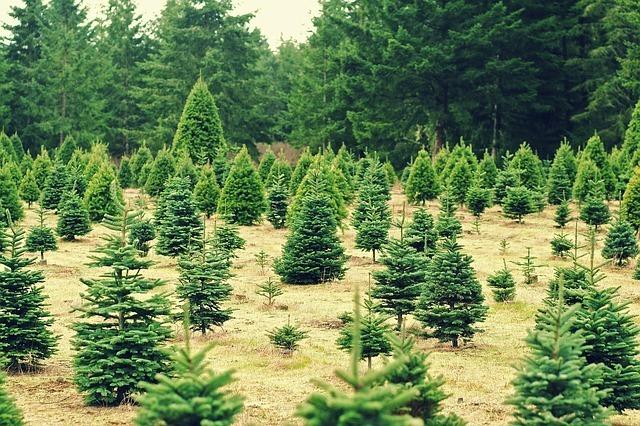 christmas, trees, xmas